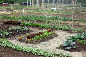 Best Compost For Vegetable Garden