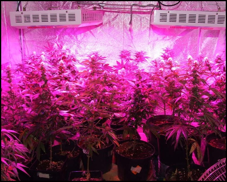 Best Indoor Led Grow Lights Reviews