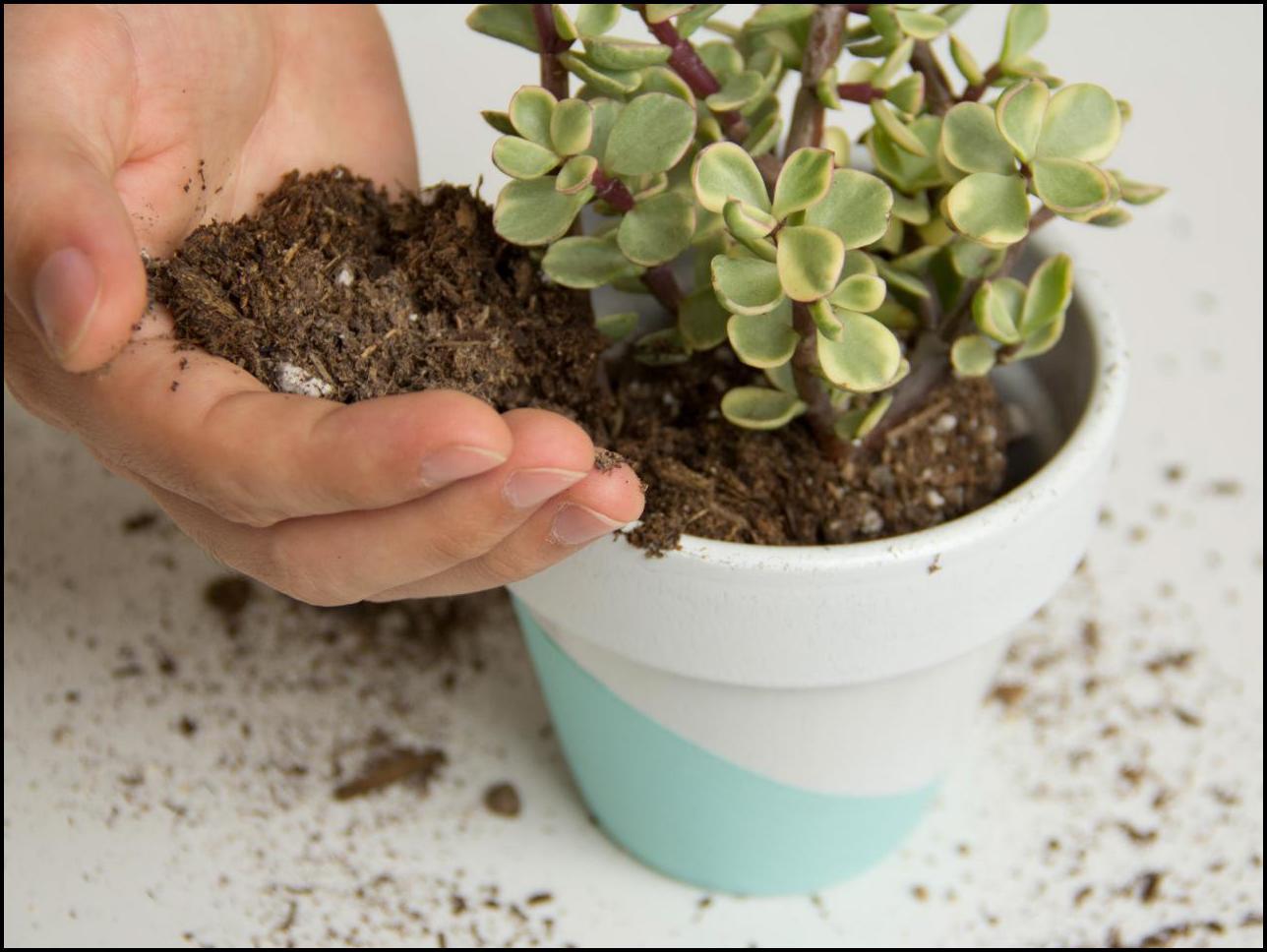 Best Potting Soil For Succulents