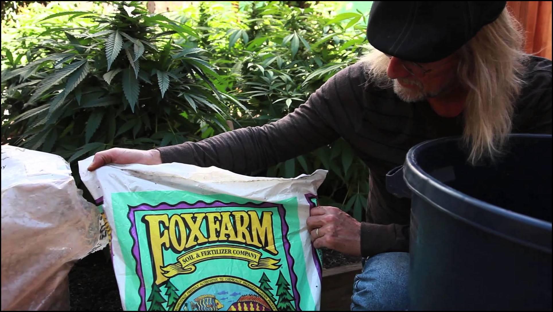 Best Soil For Indoor Cannabis