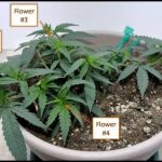 Cool Plants To Grow Inside