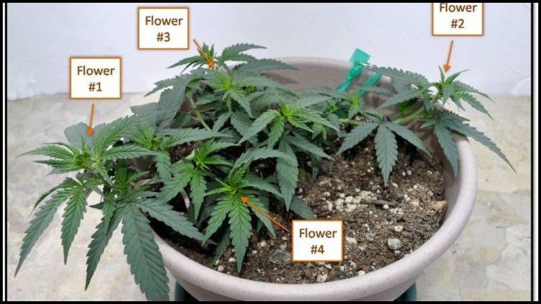 Cool Plants To Grow Inside