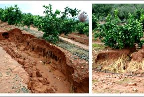 Effects Of Soil Erosion
