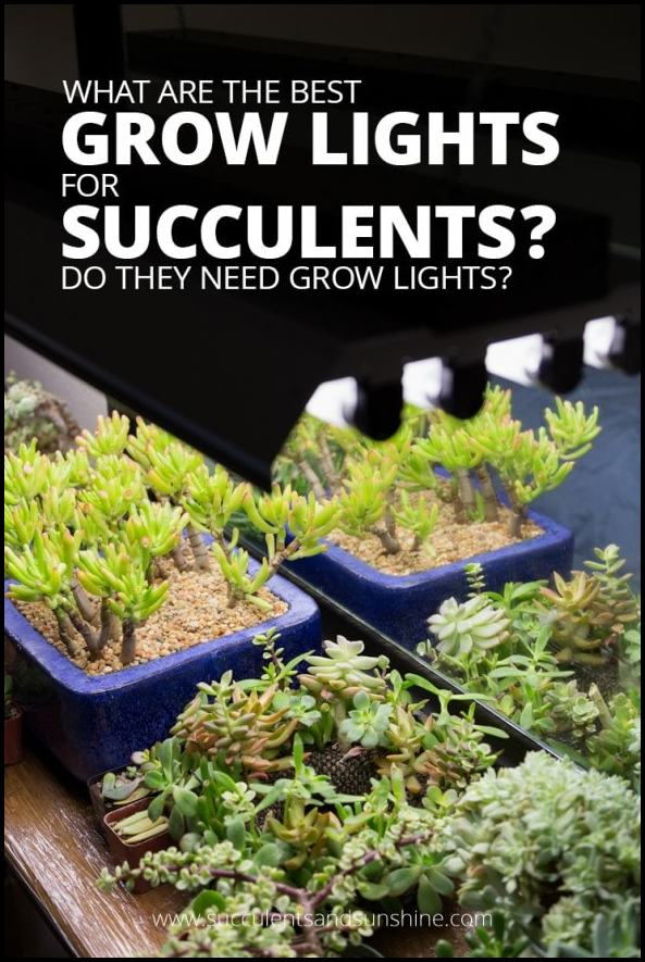 Grow Lights For Succulents
