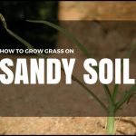 Growing Grass In Sandy Soil