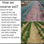 How To Conserve Soil