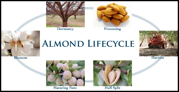 How To Grow Almonds
