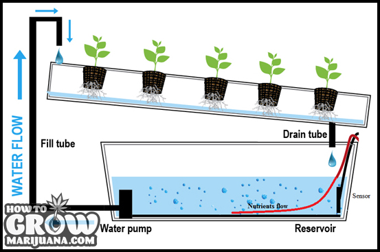 How To Grow Hydro