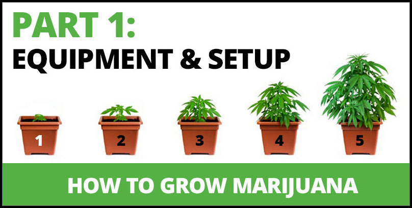 How To Grow Marjuana