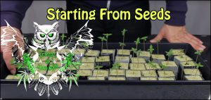 How To Start Growing Weed