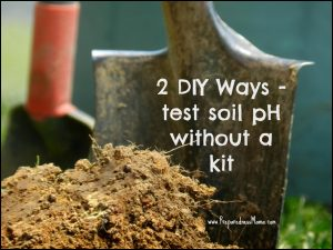 How To Test The Ph Of Soil