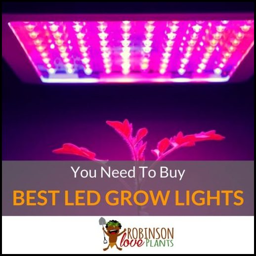 Led Grow Lights Review High Times