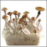 Magic Mushrooms Grow Kit