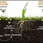 Organic Material In Soil