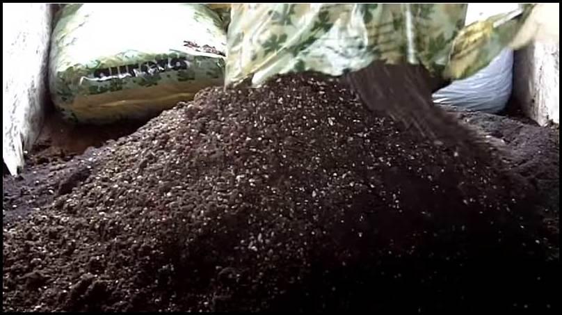 Organic Soil For Cannabis