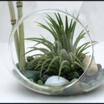 Plants That Don T Need Soil