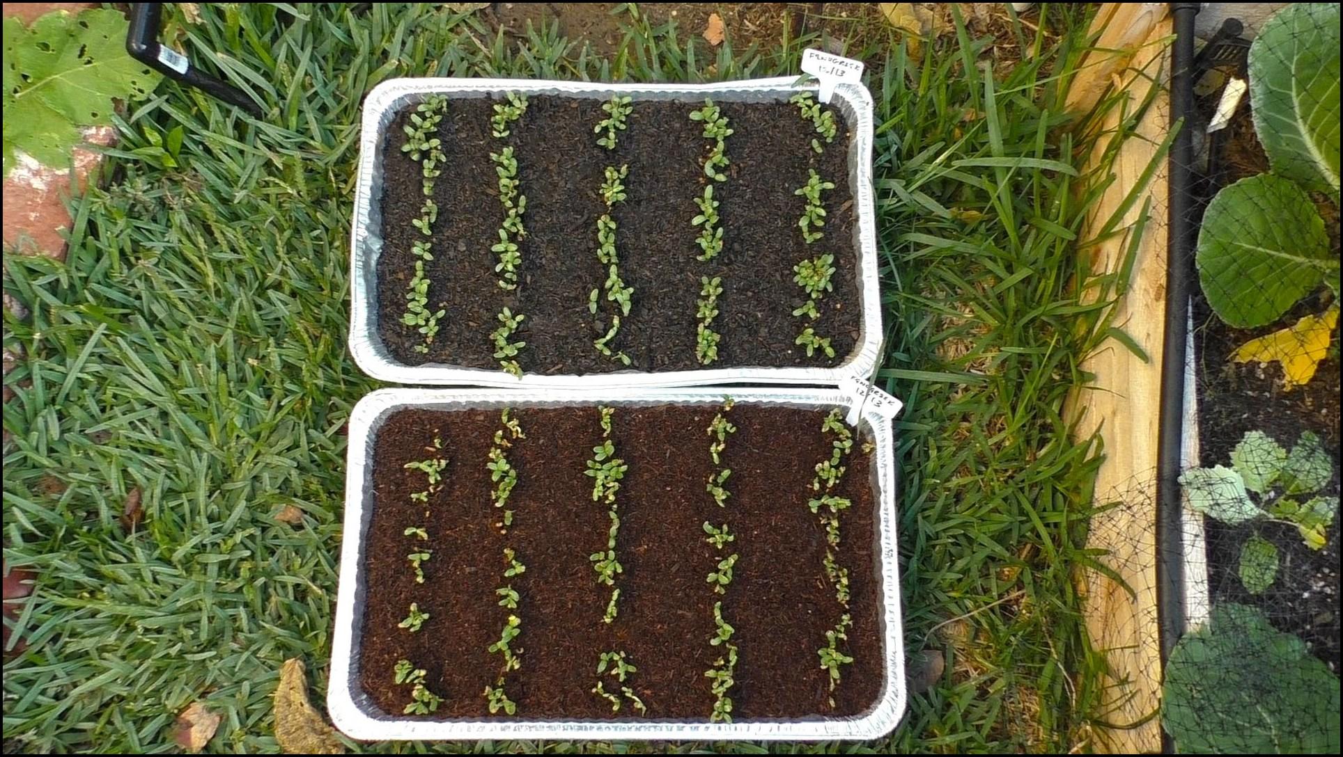 Potting Mix Vs Garden Soil