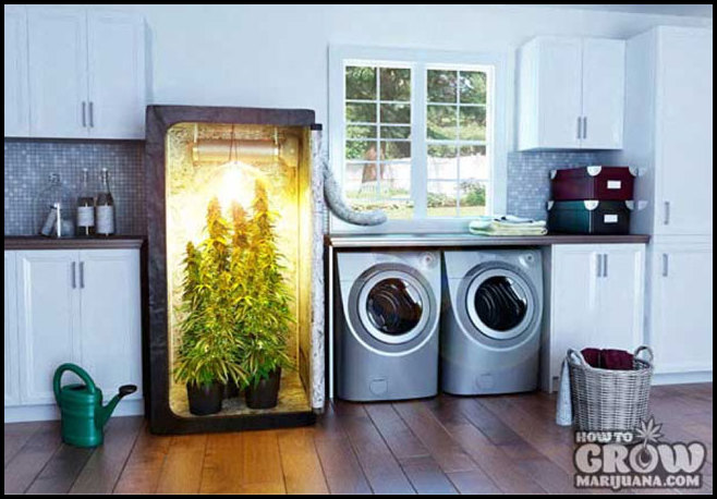 Self Contained Grow Box