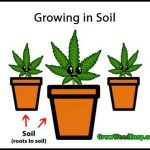 Soil For Growing Weed