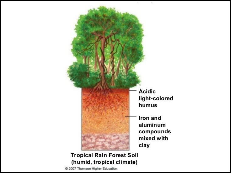 Tropical Rainforest Soil Type