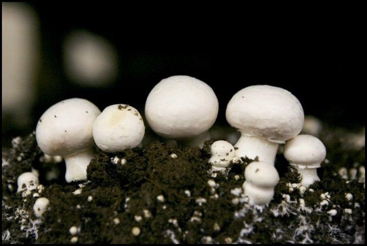 Where Do Mushrooms Grow
