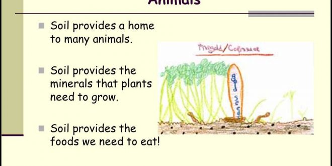 Why Is Soil Important To Plants | The Garden