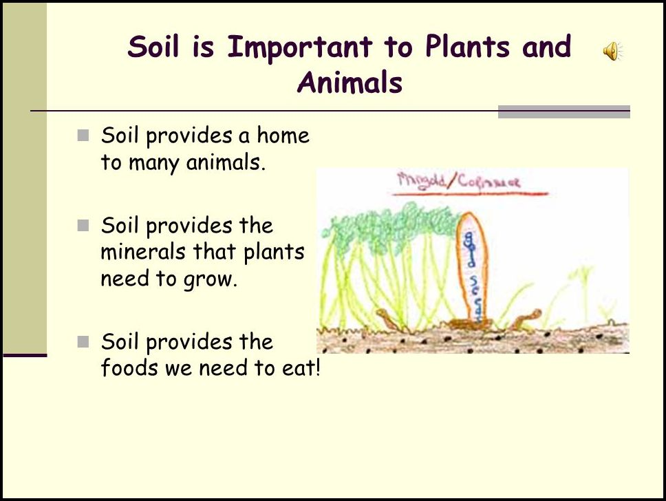 Why Is Soil Important To Plants