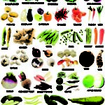Alphabetical List Of Vegetables