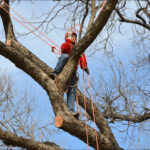 Best Time Of Year To Prune Trees