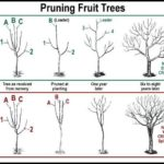 Best Time To Prune Fruit Trees