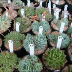 Cheap Succulents For Sale