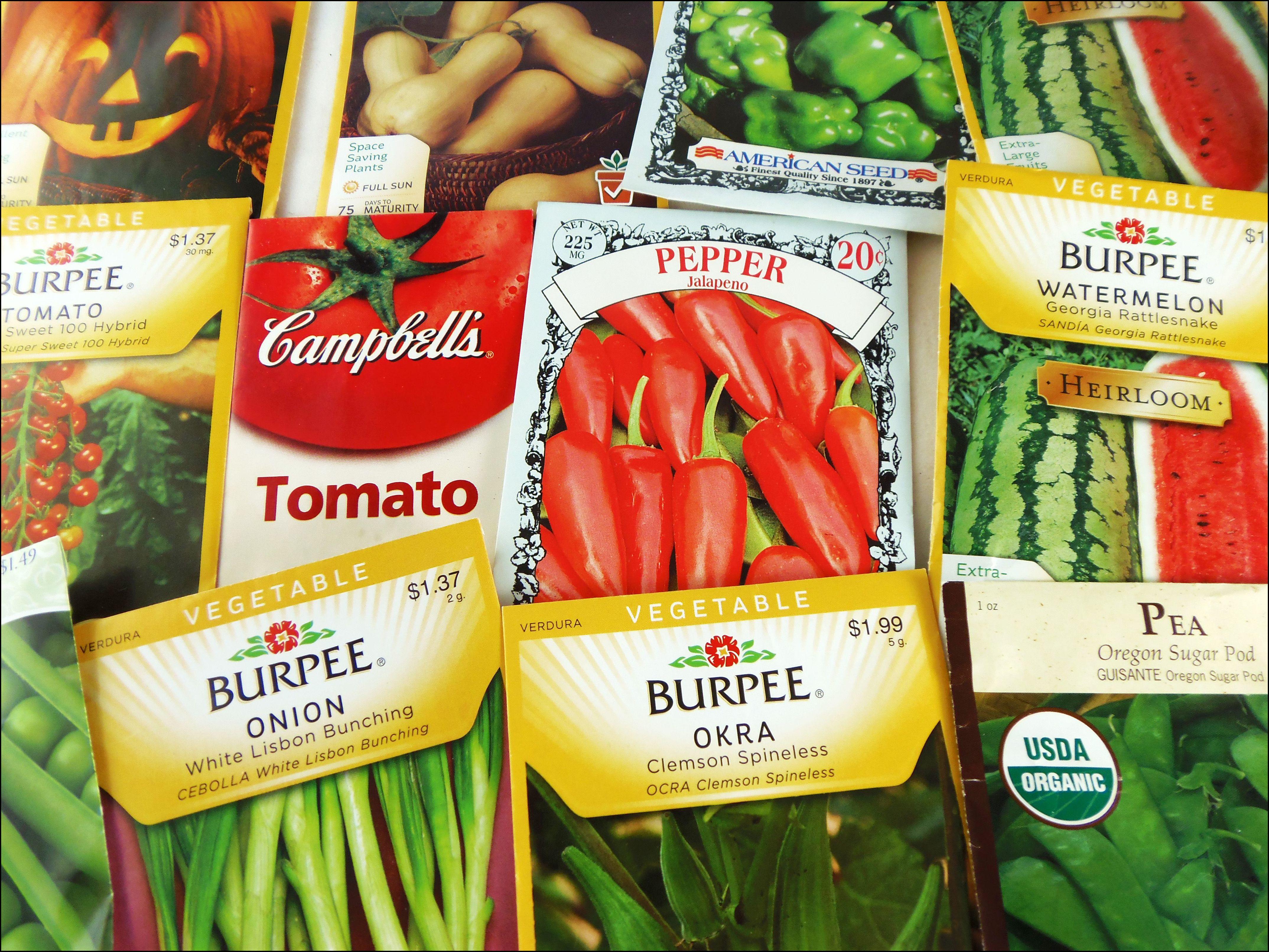 Free Vegetable Seeds Samples
