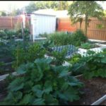 Growing Vegetables In Florida
