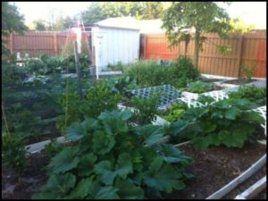 Growing Vegetables In Florida