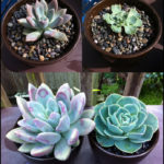 How Fast Do Succulents Grow