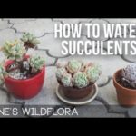 How Often Do You Water Succulent Plants