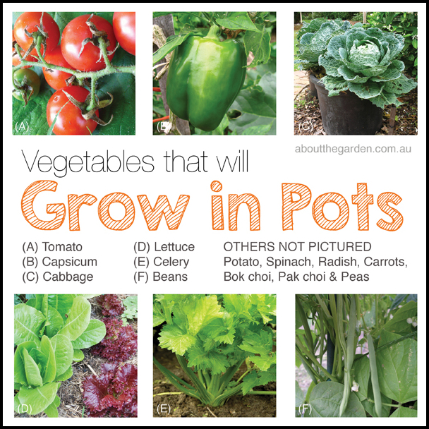 How To Grow Organic Vegetables