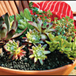 How To Plant Succulents In Pots