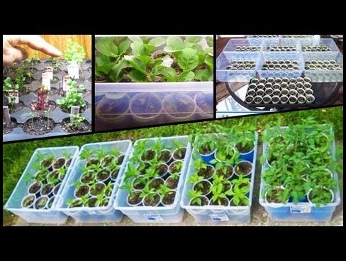 How To Plant Vegetable Seeds