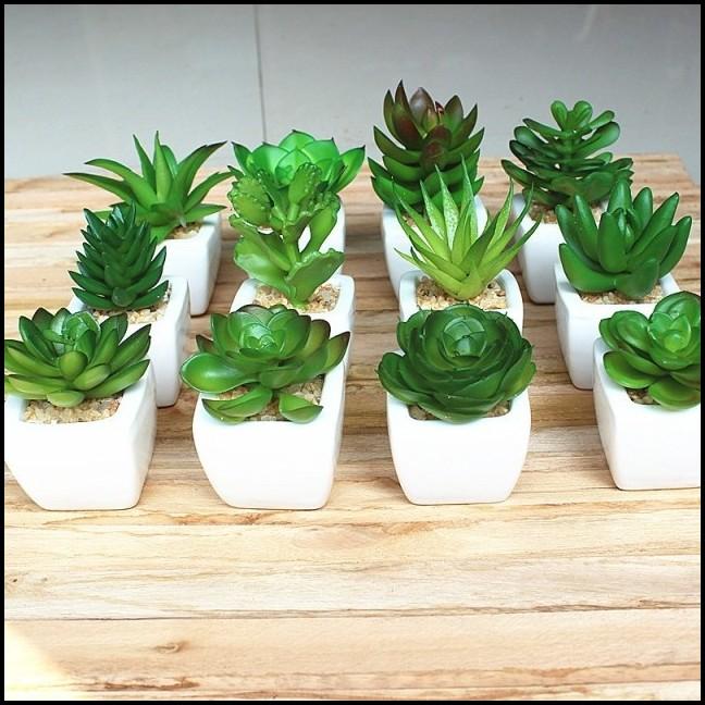 Mini Succulents For Sale