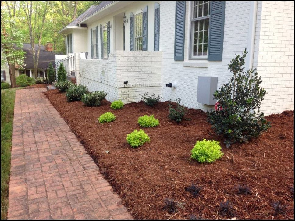 Pine Needles For Mulch