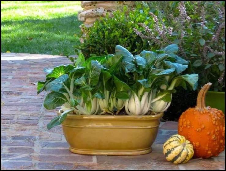 Planting Vegetables In Pots