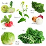 Vegetables To Plant In The Fall