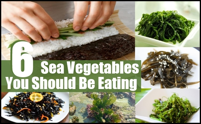 What Are Sea Vegetables