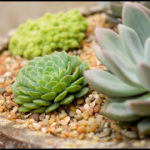 What To Plant Succulents In