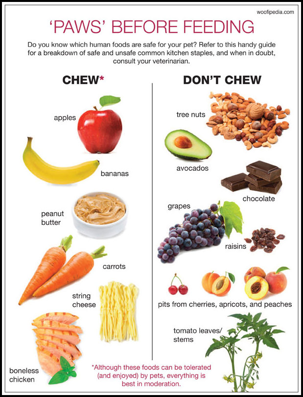 What Vegetables Are Bad For Dogs