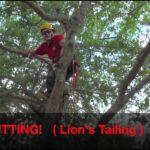 When To Prune Oak Trees