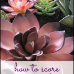 Where To Buy Cheap Succulents