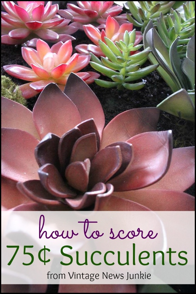 Where To Get Succulents