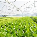 Greenhouse Business For Sale